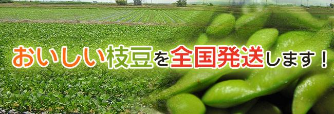 おいしい枝豆を全国発送します!